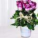 Balde Con 12 Rosas Moradas