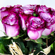 Balde Con 18 Rosas Moradas