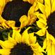 Espuma floral (2.0), Girasoles (12.0), Decorado con papel arroz (1.0), Decorado con una malla simple (1.0), Espuma floral (2.0), Papel celofán (1.0), Ruscus (8.0), Papel celofán (1.0), Ruscus (8.0), Decorado con papel arroz (1.0), Decorado con una malla simple (1.0), Girasoles (12.0)