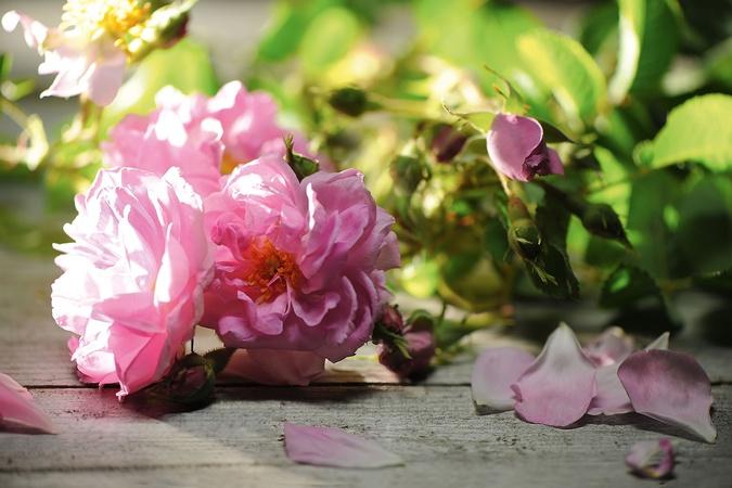 El color de las rosas para regalar