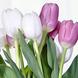 Arreglo De Tulipanes Bicolor Élégant