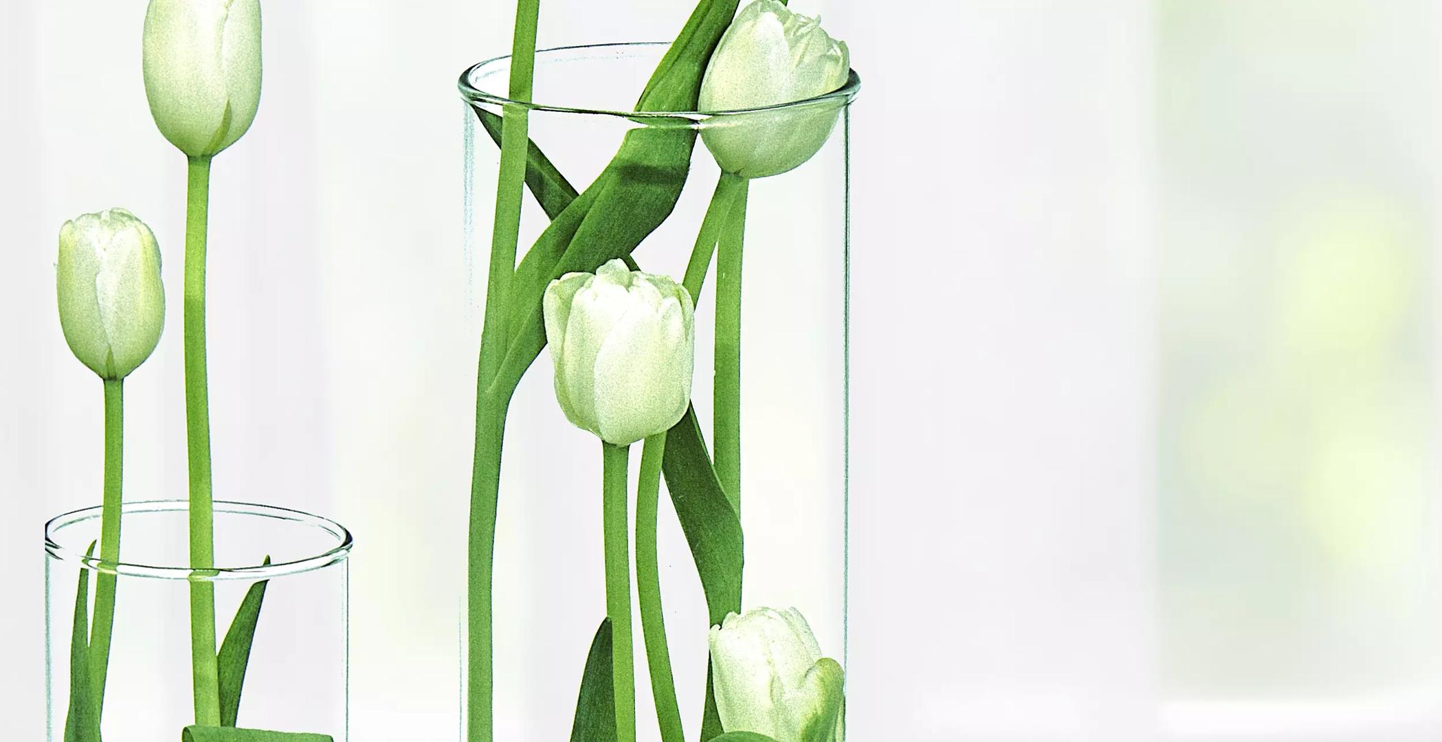 Pack Natura Tulipán ( Blanco)  Junto A Un Chocolate Ferrero Rocher De 150Gr