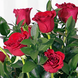Espuma floral (1.0), Rosa roja importada de tallo largo (18.0), Decorado con papel arroz (1.0), Cintarafia (3.0), Espuma floral (1.0), Ruscus (10.0), Ruscus (10.0), Decorado con papel arroz (1.0), Cintarafia (3.0), Rosa roja importada de tallo largo (18.0)
