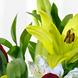 Espuma floral (1.0), Rosa roja importada de tallo largo (6.0), Astromelias (10.0), Decorado con papel arroz (1.0), Cintarafia (2.0), Ruscus (8.0), Liliums Amarillos (6.0)