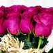 Balde Con 12 Rosas Fucsia