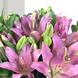 Sorpresa Con Liliums