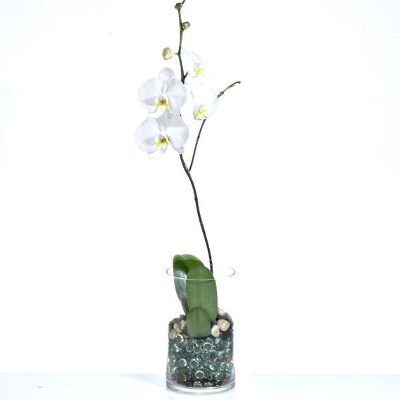 Orquidea Blanca En Cilindro De Cristal