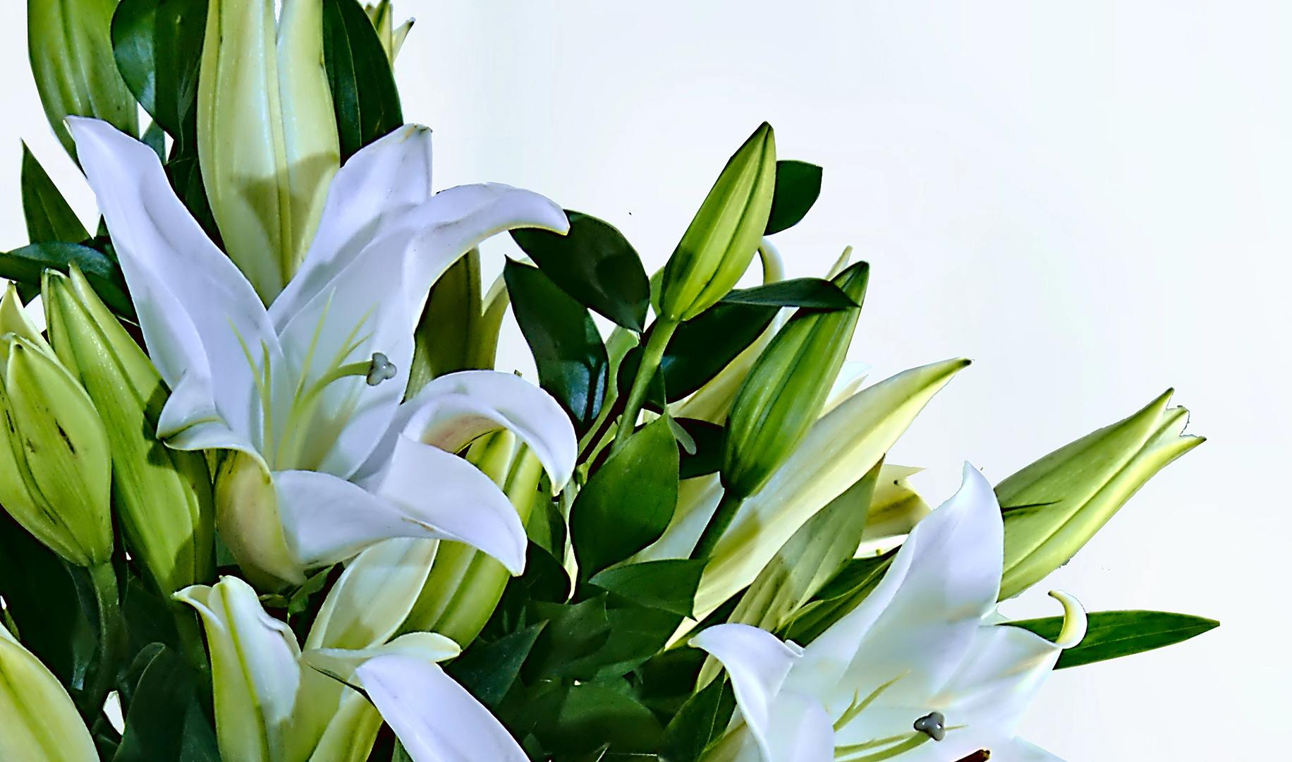 Espuma floral (1.0), Ruscus (6.0), Papel empavonado Beige (2.0), CINTASATIN BEIGE (3.0), Liliums Blancos (10.0)