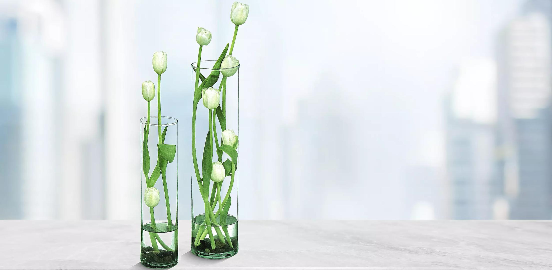 Natura Tulipán ( Blanco )