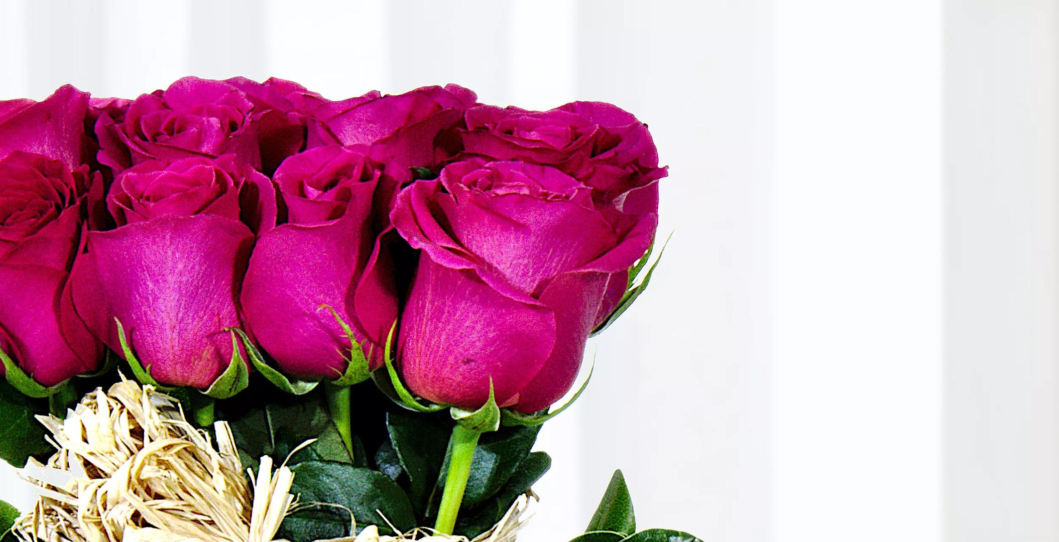 Balde Con 18 Rosas Fucsia
