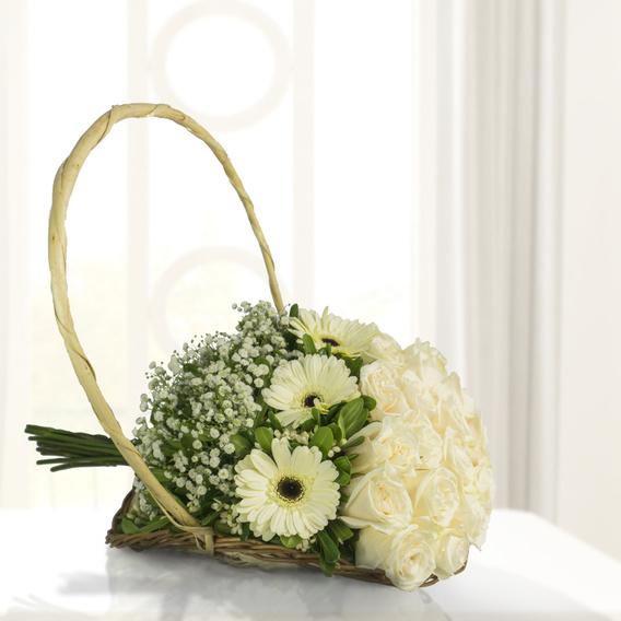 Violetero Con 24 Rosas Blancas