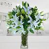 Espuma floral (1.0), Ruscus (6.0), Decorado con papel arroz (1.0), Adornado con cinta satín (3.0), Liliums Blancos (10.0)